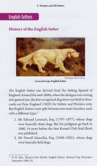 History of the English Setter