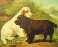 Clumber and Sussex Spaniels (1890)