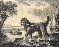 Old Water Spaniel